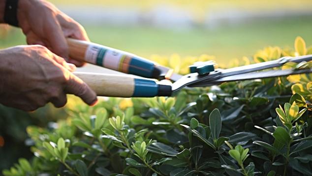 consejos para tener limpio el jardín